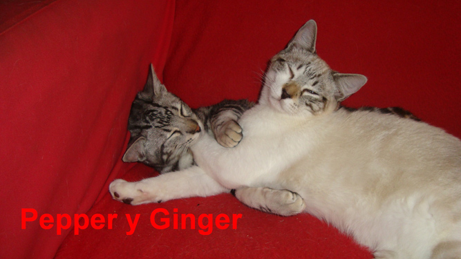Ginger y Pepper